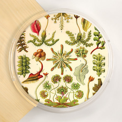 Round Lucite Tray - 4239S