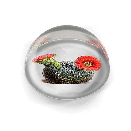Glass Cabochon - 5427S