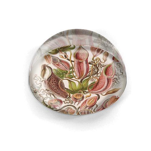 Glass Cabochon - 5603S
