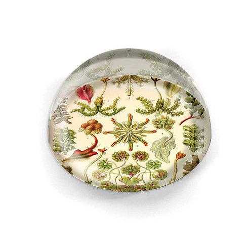 Glass Cabochon - 4239S