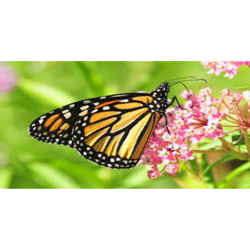 "Garden Talk:  ""Planting for Pollinators"""
