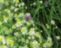 gardenflowers.jpg