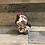 Thumbnail: Chat Harun, de diamètre 18cm