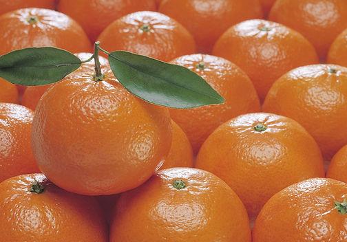 oranges CGC.jpg