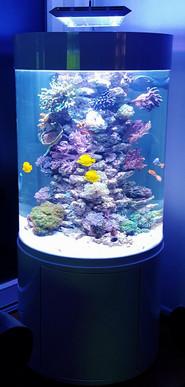 Rundes Aquarium