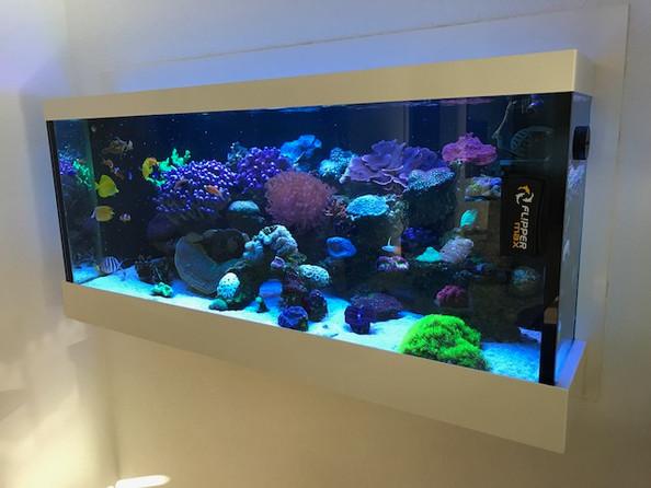 Einbau Aquarium