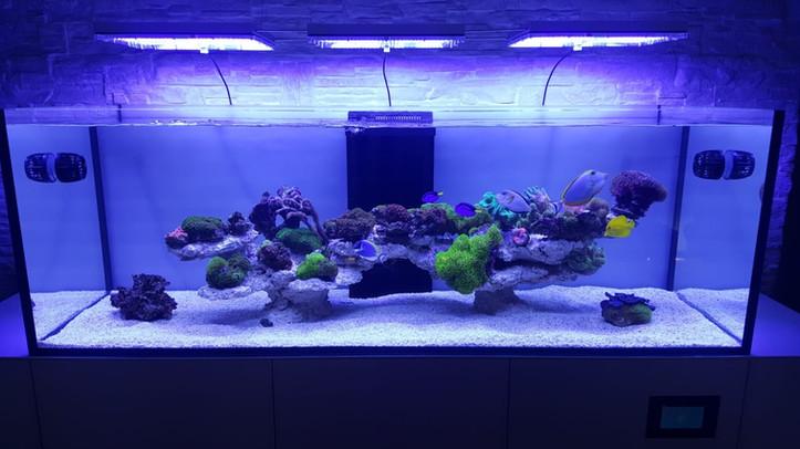 Aquarium Meerwasser