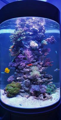 Zylinder Aquarium