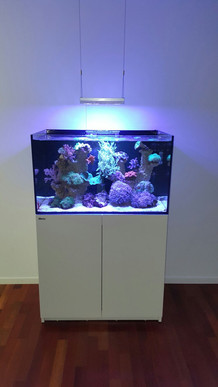 Red Sea Aquarium