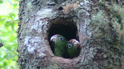 Pichones en la puerta del nido.