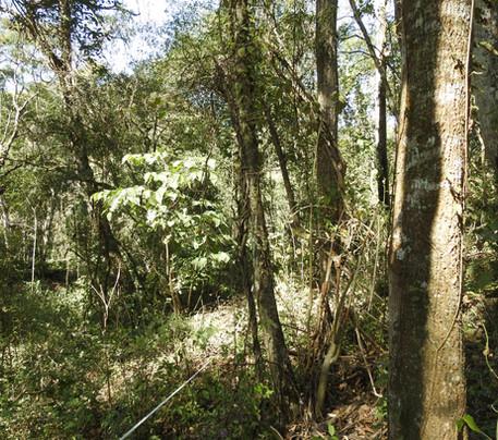 Copia de 3 Selva Pedemontana de Yungas.J