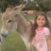 Donkey Pretoria