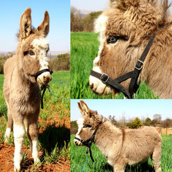 Blue Eyed Jack Foal