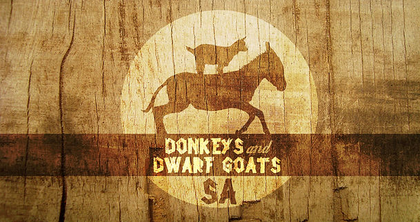 Donkeys and Dwarf Goats for sale in South Africa