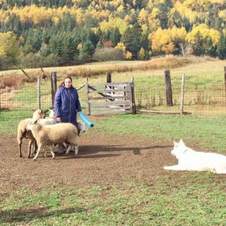 Kira herding