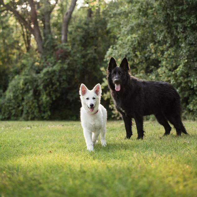 Romy et Lexi.jpg