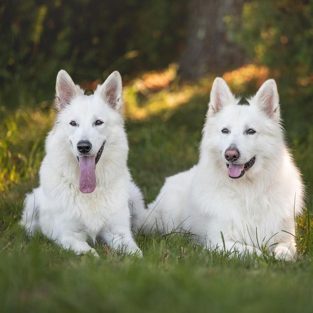 Kira et Sochi.jpeg
