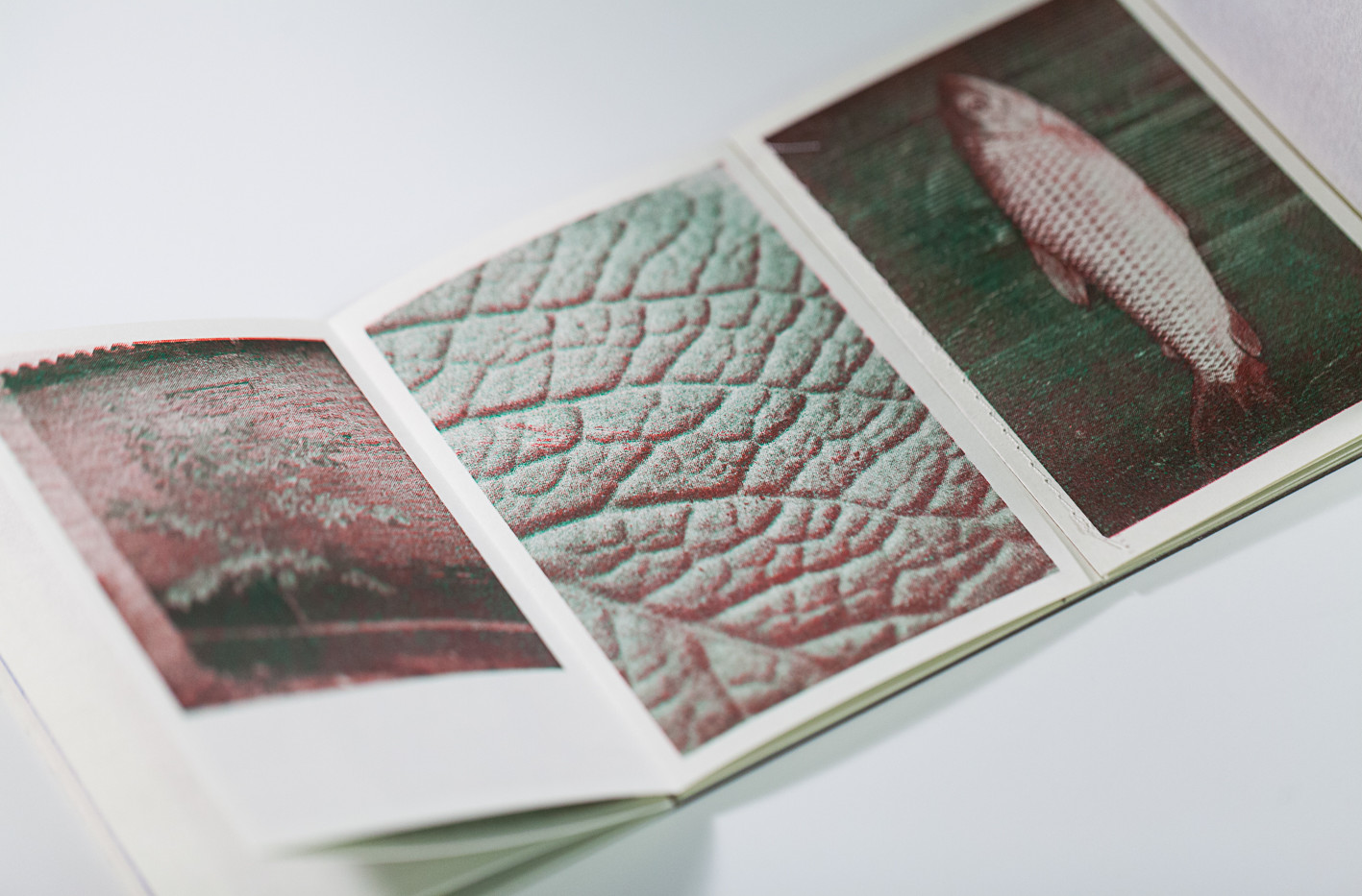 livro_Inventário_verde_da_boa_esperanç