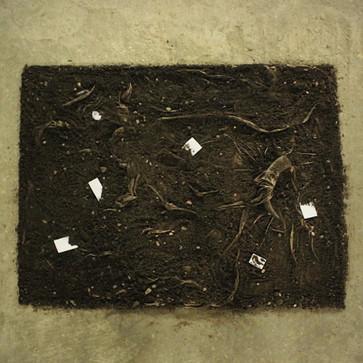 plantas e fantasmas _arapuca 2.jpg