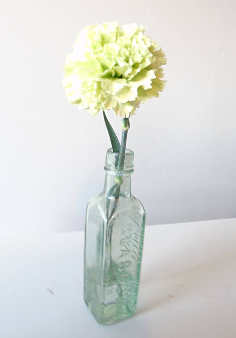 Carnation in a bottle