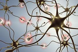 neurons, transferring pulses and generat