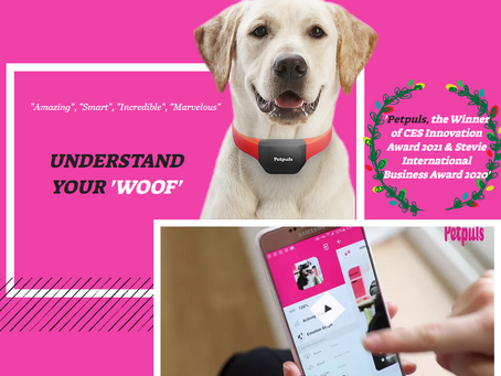 Petpuls' smart collar lets you know how your dog feels