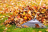 Brampton, Mississaugua, Georgetown Residential & Commercial Property Maintenace, cleanup, leaves, weeds, fall and spring cleanup