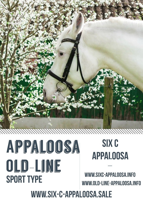 Appaloosa Old-Line   Appaloosa Foundation   Appaloosa Sport Horse   By SIX C Appaloosa