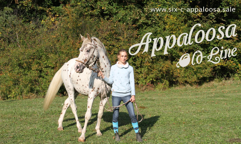 Appaloosa Old-Line   Appaloosa Sport