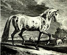 Appaloosa | Niimipu | Nimi'ipuu | Maamin | Nez Perce Horse | Nez Perce Indians | Siri Sheik | Arab Toswirah Alkhar | Jazzo | Jazzo II | Jazzbol | Spotted Horse | Indian Spirit Horse | Ghost Wind Horses | Appaloosa Old-Line | Appaloosa Foundation | Appaloosa Sport Horse | Palouse Horse | Palus | Pelouse | Palouse | Palousy | A Palouse | Apalouse | Apalousie | Apalousy | Apalousey | Appaloosey | Appaloosa | Palouse River | Palouse People | Appaloosa Horse Club | ApHC | Dr. Francis Haines |  George Long Grass | Howling Elk | Frank Scripter | Appaloosa the spotted horse in art and history | Black Leopard Appaloosa | Snowcap Appaloosa | Fewspot Appaloosa | Solid Appaloosa |Roan Appaloosa |  Indian Shuffler | Gaited Appaloosa | Sunspot Revel | Sunspots Eclipse | Revel Junior | DREA Foundation Appaloosa | DREA Eaglestud Sundy | Don and Mary Ulrich Appaloosa | Money Creeks Rockledge | Roi-Eclat Nonpareil | John and Alice Pratt | Milton Decker | Red Eagle | Pratt Sully Fire | Claude J. Thompson of Moro Oregon | Toby Cherokee Chief | SIX C Appaloosa | AHF Hearts Desire | Austrailian Shepherds | CHIEF MALHEUR | CHIEF OF FOURMILE | CHIEF CHELSEA | SIMCOE'S HORSES |  SIMCOE'S SNOWY ROCK | FRUHLING'S HORSES | APACHE | RED EAGLES PEACOCK | RED EAGLE | SPOTTED EAGLE | STORM CLOUD | SPOTTED EAGLE | MANSFIELD COMANCHE | OKLAHOMA | JOKER B | SUNDANCE 500 | Sundance | High Thunderbird | THE TOBYS | DOUBLE SIX DOMINO | RODEO DAY |  THE GHOST WIND STALLIONS |