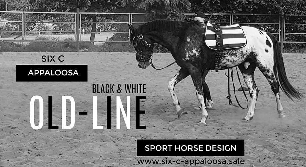 Appaloosa Old-Line Sport Horse
