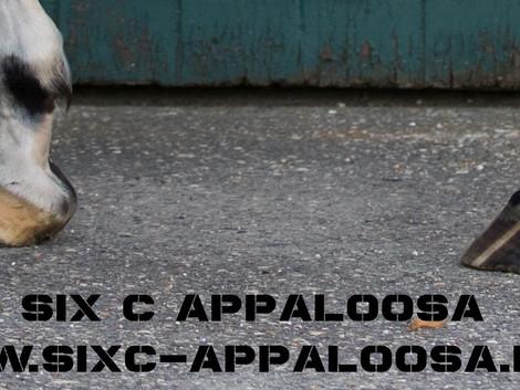 Appaloosa   LP-GEN > Hufe