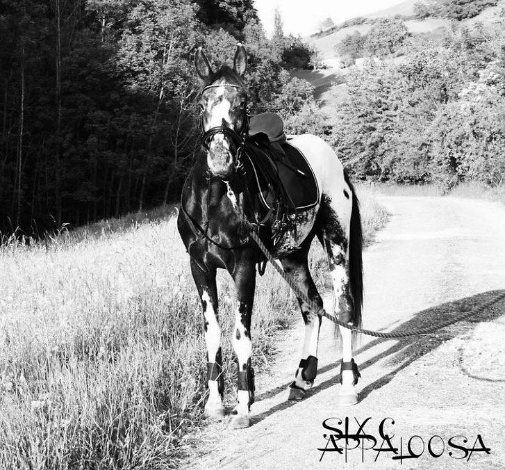 Appaloosa Old-Line | Appaloosa Foundation | Appaloosa Sport Horse | Spotted Appaloosa Horse | Palouse Horse | Nez Perce Horse | Sunspots Eclipse Appaloosa | Sunspot Revel Appaloosa | Revel Junior Appaloosa
