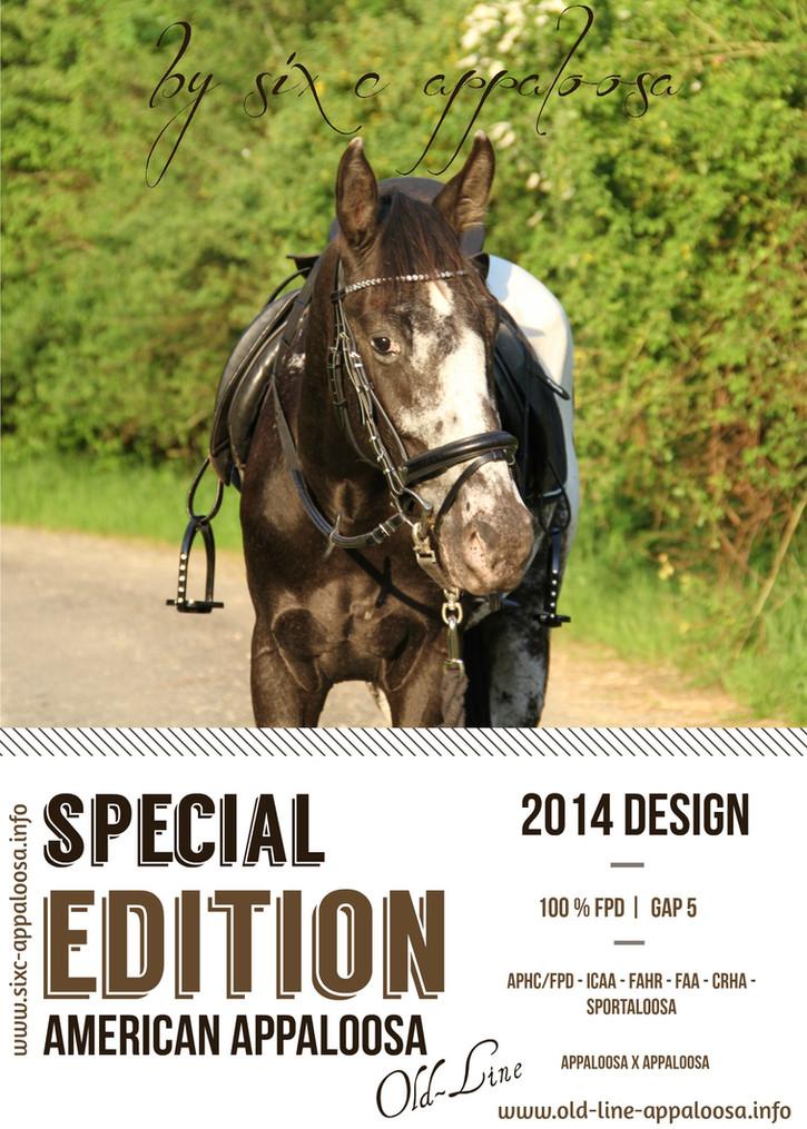 SIX C Appaloosa | Old-Line Appaloosa Sport Horse