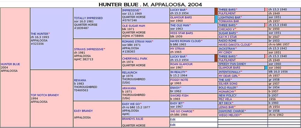 Appaloosa Hunter Blue mit Gray Gen | By SIX C Appaloosa