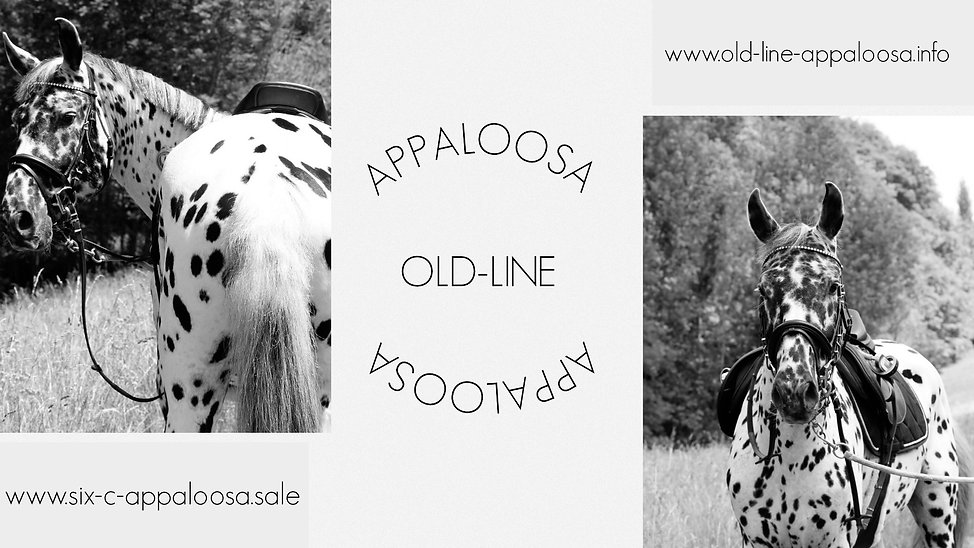 Appaloosa Old-Line | Appaloosa Sport Horse | Appaloosa Foundation