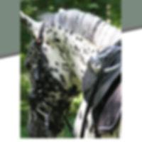 Appaloosa Old-Line Appaloosa Foundation