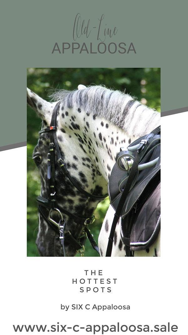 Appaloosa Old-Line Appaloosa Foundation Appaloosa Sport Horse Appaloosa Allrounder Hunter Equitation Hunt Seat Springreiten Dressurreiten Vielseitigkeitsreiten Westernreiten by SIX C Appaloosa
