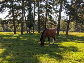 Willow Creek Horses