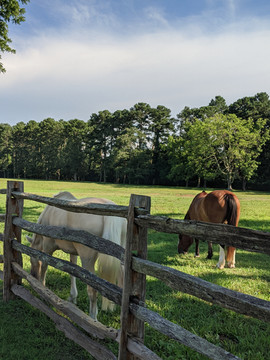 Willow Creek Views Horses