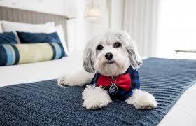 """Hotel """"Pet Friendly"""" in Riccione"""