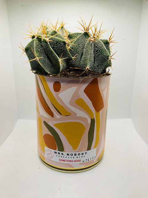"Cactus Miss Nobody ""Something Good"""