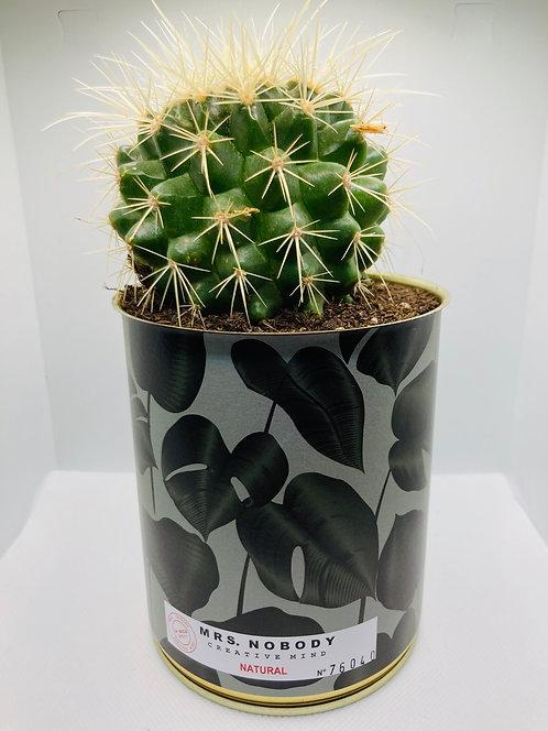 """Cactus Miss Nobody """"Natural"""""""