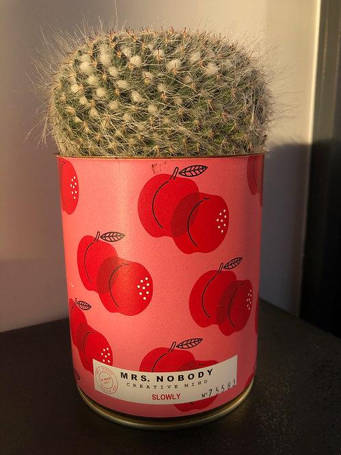 """Cactus Miss Nobody """"Slowly"""""""