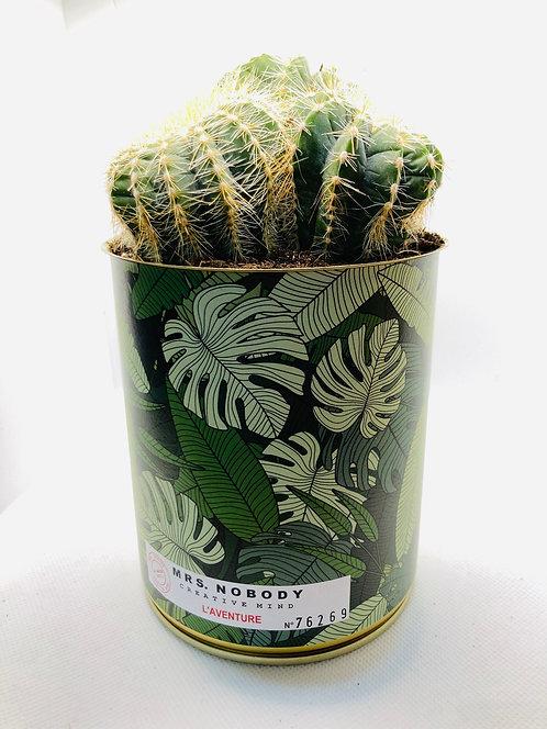 """Cactus Miss Nobody """"L'Aventure"""""""