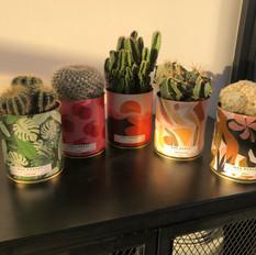 Cactus et plantes de petits producteurs made in France.