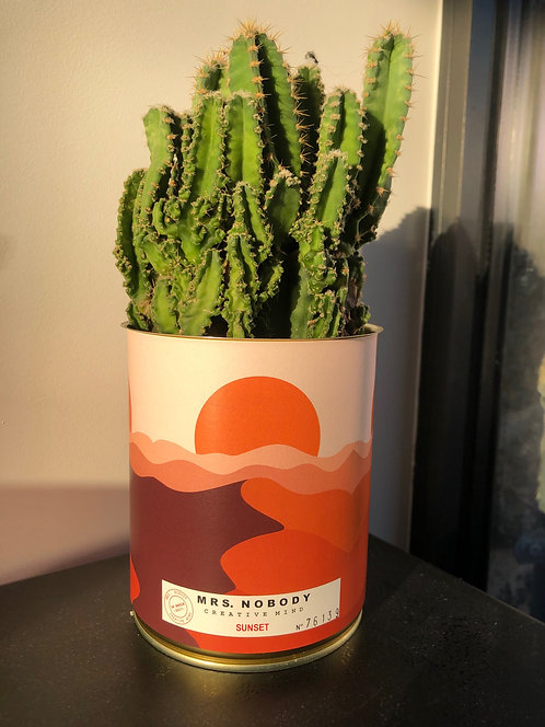 "Cactus Miss Nobody ""Sunset"""