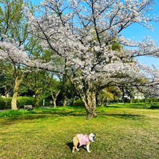 再・桜と・・・