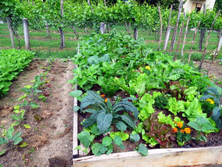 Quels légumes cultiver à l'ombre ?
