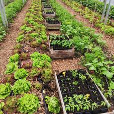A l'intérieur de la serre Urban Farm